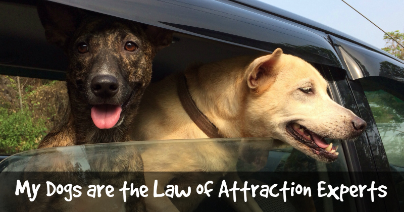 The Law of Attraction – Does It Help to Manifest What You Want?